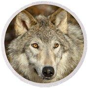 Wolf Portrait Round Beach Towel