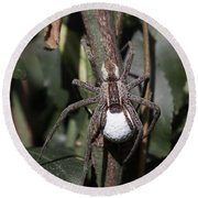 Wolf Spider With Egg Sac Round Beach Towel