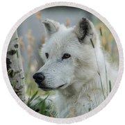 Wolf, White Round Beach Towel
