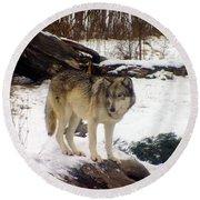 Wolfe In Winter Snow Round Beach Towel