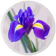 Wonderful Iris With Dew Round Beach Towel