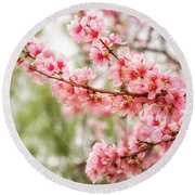 Wonderful Pink Cherry Blossoms At Floriade Round Beach Towel