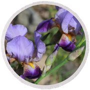 Wonderful Purple Irises Round Beach Towel