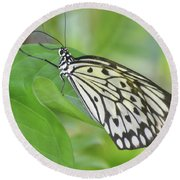 Wonderful Up Close Look At A Large Tree Nymph Butterfly Round Beach Towel