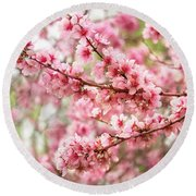 Wonderfully Delicate Pink Cherry Blossoms At Canberra's Floriade Round Beach Towel