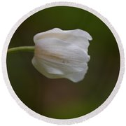 Wood Anemone 5 Round Beach Towel
