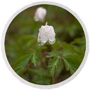Wood Anemone Heavy From The Rain Round Beach Towel