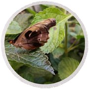 Wood Butterfly Round Beach Towel