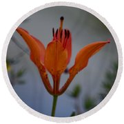 Wood Lily With Lake Superior In Background Round Beach Towel