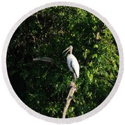 Wood Stork-out On A Limb Round Beach Towel