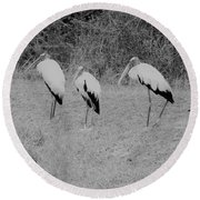 Wood Storks By The Water's Edge Round Beach Towel