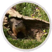 Woodchuck Ready For Spring Round Beach Towel