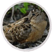 Woodcock At Rest Round Beach Towel