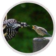 Woodpecker Feeding Bluebird Round Beach Towel