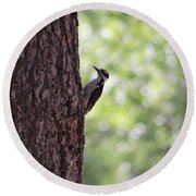 Woodpecker In New Mexico Round Beach Towel