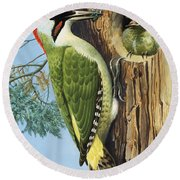 Woodpecker Round Beach Towel by RB Davis