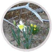 Woodsy Narcissus Round Beach Towel