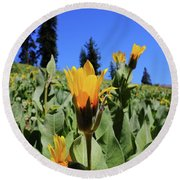 Woolly Mule's-ear At Lassen Park Round Beach Towel