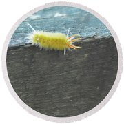 Wooly Worm In Shiloh, Tn Round Beach Towel