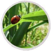 World Of Ladybug 2 Round Beach Towel