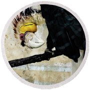 Wreathed Hornbill Perching Against Vintage Concrete Wall Backgro Round Beach Towel