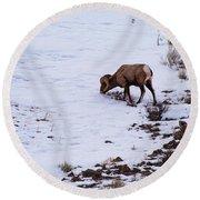 Wyoming Big Horn Round Beach Towel