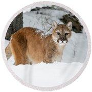 Wyoming Wild Cat Round Beach Towel