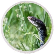 Yard Snake Round Beach Towel