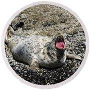 Yawning Harbor Seal - Oregon Coast Round Beach Towel