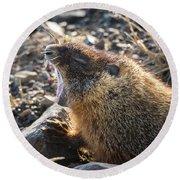 Yawning Marmot Round Beach Towel