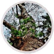 Ye Ole Tree At Chichen Itza Round Beach Towel