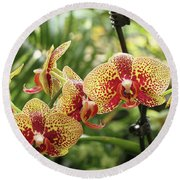Yellow And Red Spotted Phalaenopsis Orchids Round Beach Towel