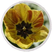 Yellow And Red Tulip Center Squared Round Beach Towel