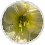 Yellow And White Daylily Round Beach Towel