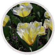 Yellow And White Tulips Flowering In A Garden Round Beach Towel