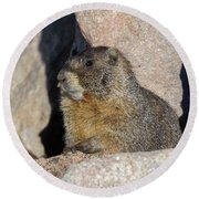 Yellow-bellied Marmot Poses For Pictures Round Beach Towel