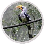 Yellow Billed Hornbill Round Beach Towel