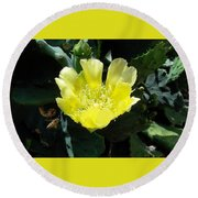 Yellow Bonnet, Cactus Round Beach Towel