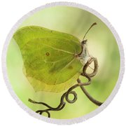 Yellow Butterfly On The Branch Round Beach Towel