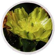 Yellow Cactus Blossom Round Beach Towel