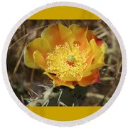 Yellow Cactus Flower On Display Round Beach Towel