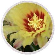 Yellow Cactus Plant Flower Round Beach Towel