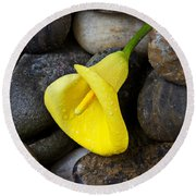 Yellow Calla Lily On Rocks Round Beach Towel