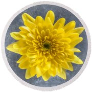 Yellow Chrysanthemum Flower Round Beach Towel