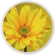 Yellow Chrysanthemum On Yellow Round Beach Towel