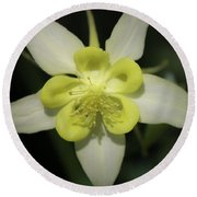 Yellow Columbine Squared 2 Round Beach Towel