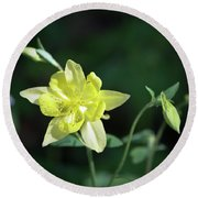 Yellow Columbine Squared Round Beach Towel
