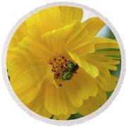 Yellow Cosmos Flower Round Beach Towel