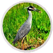 Yellow Crested Night Heron Catches A Fiddler Crab Round Beach Towel