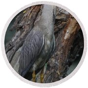Yellow Crested Night Heron On Log Round Beach Towel